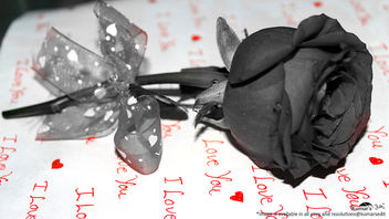 Love in saint valentines breeze with rose flower (black and white) [Happy Valentines Day] - image #320345 gratis