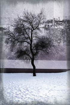 the winter tree - free 2 use BG - Free image #321825