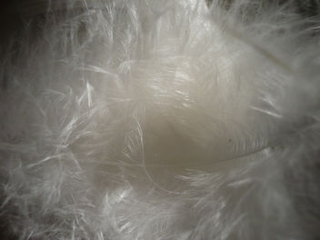 free texture- feather - Free image #322145