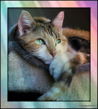 Sweet and Serene - image #322915 gratis