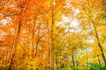 Fall foliage in Millstone, New Jersey 2015 - бесплатный image #327235