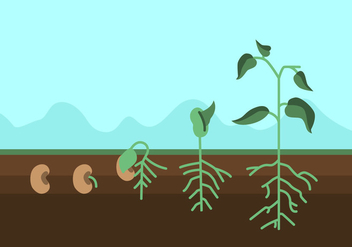 Vector Plant Growth Cycle - Kostenloses vector #327565