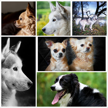 A few dogs - image gratuit #328395