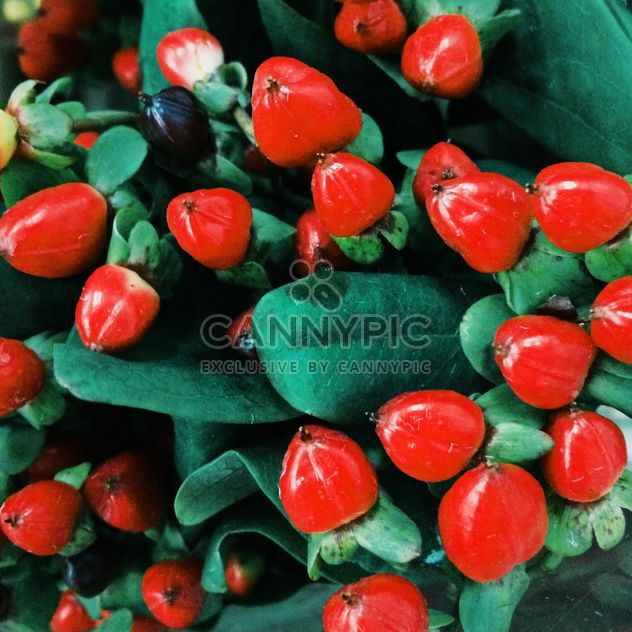 Hypericum red bouquet - Free image #329265