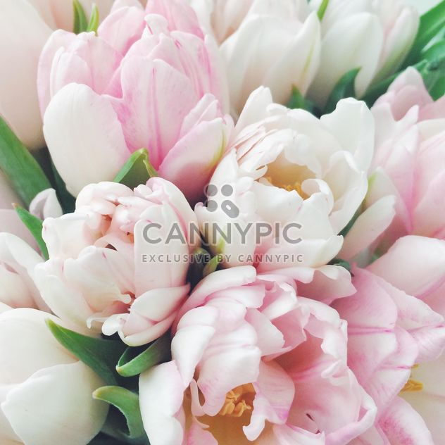 Beautiful spring tulips - image gratuit #329285