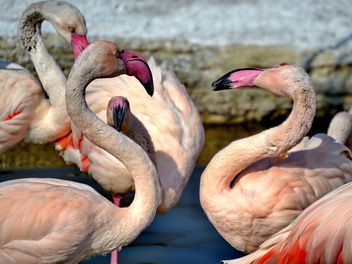 pink flamingos in park - Free image #329885