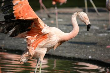 Flamingo in park - Free image #329935