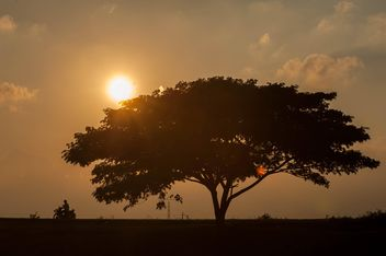 Huge tree at sunset - image gratuit #330005