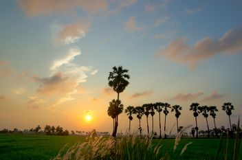 sunset on the field - image gratuit #330015