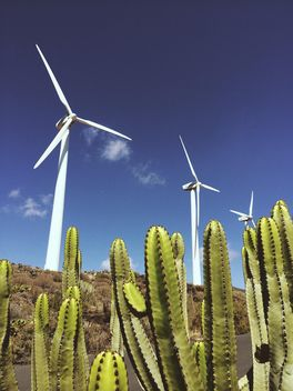 Landscape of cactus and windmills - Free image #330845