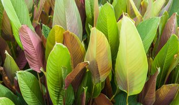 Green foliage of different tones - Kostenloses image #330955
