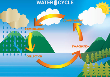 Water Cycle Diagram Vector - бесплатный vector #332605