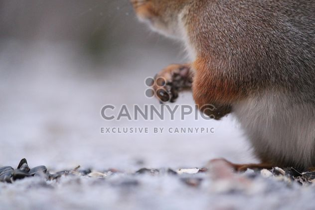 close up of Squirrel in the park - Free image #332805