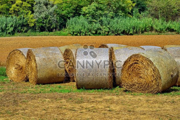 Countryside agriculture - бесплатный image #333735