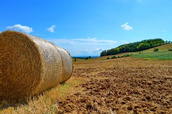 Haystacks, rolled into a cylinders - image gratuit #334745