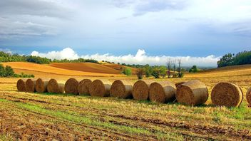 Haystacks, rolled into a cylinders - image gratuit #334755