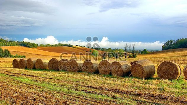 Haystacks, rolled into a cylinders - Free image #334755