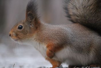 Squirrel eating nut - image #335035 gratis