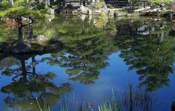 Japan (Kyoto) Reflection of pine trees like mirror image - image gratuit #336485
