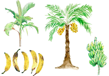 Watercolor Banana Tree Vectors - Free vector #336675