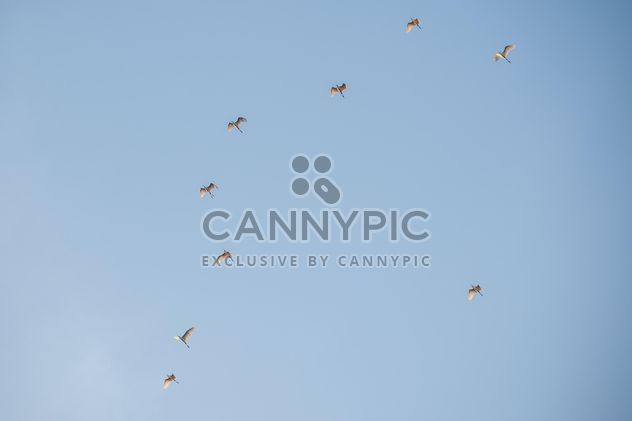 Flock of birds in blue sky - Free image #337475