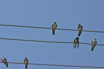 Swallows on electric wires - Free image #337485