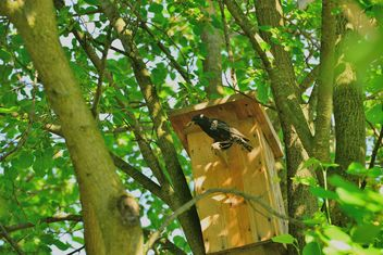 Starling on nesting box - image gratuit #337555