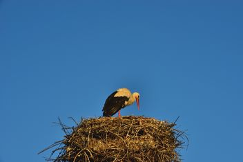 Stork in nest against sky - Free image #337565
