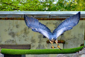 Bird of prey in zoo - image #337815 gratis