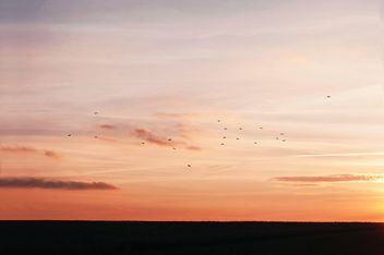 Birds in sky at sunset - Free image #338555