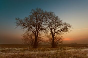 Landscape with trees at sunset - Free image #338565