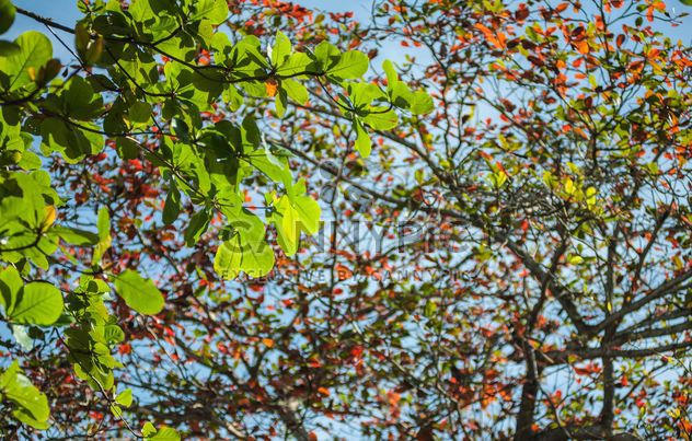 Colorful leaves on tree branches - Free image #338605