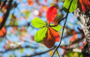Colorful leaves on tree branch - image #338615 gratis