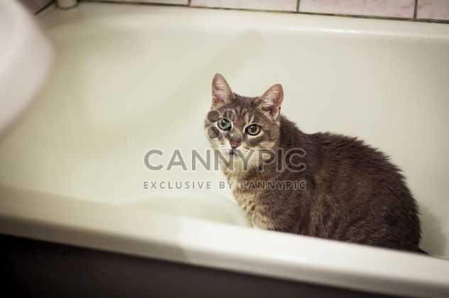 Grey cat in bath - image #339195 gratis