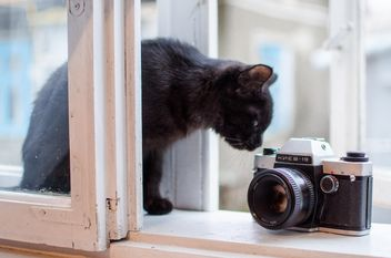 Black kitten and old camera - image gratuit #339215