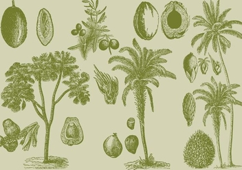 Old Style Drawing Palms - Kostenloses vector #339515