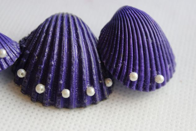 Violet shells on white background - Free image #341465