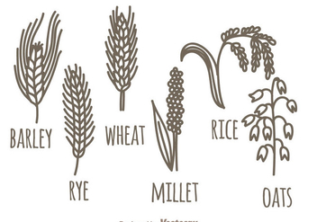 Cereals Plant Set - vector gratuit #342295