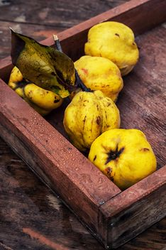 Quinces in wooden box close-up - бесплатный image #342595