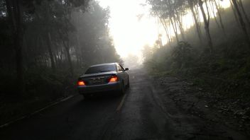 Car on a misty road through the wood - бесплатный image #344185