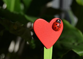 Decorative heart with toy ladybug - image gratuit #346585
