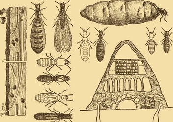 Old Style Drawing Termite Vectors - vector gratuit #346675