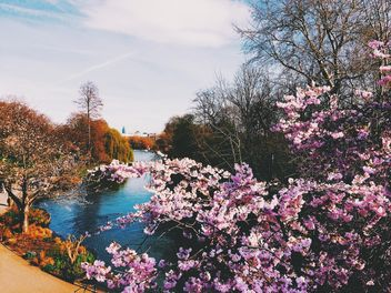 Blooming trees in park, London, England - Free image #346915