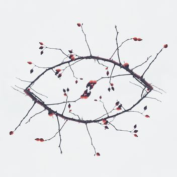 Branches in shape of eye on white background - image #347185 gratis