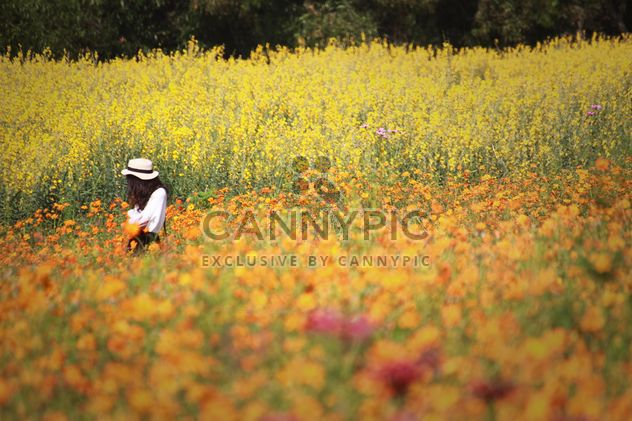 Stylish brunette girl in field of flowers - Free image #347325