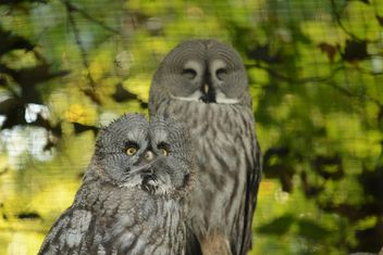 Two owls on natural green background - image #348425 gratis