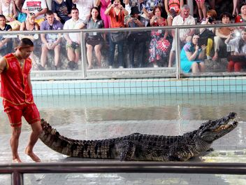 Show on Crocodile Farm - бесплатный image #350255