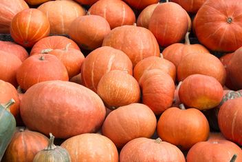 Heap of ripe pumpkins - Free image #350285