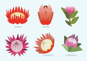 Protea Flower Vector - бесплатный vector #350325