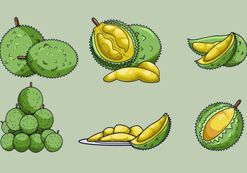 Delicious Durian Fruits Vector - vector gratuit #350335